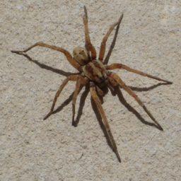 Уничтожение пауков в Комсомольске-на-Амуре